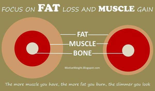 肌肉與贅肉
