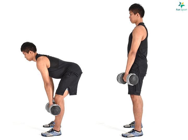 ※ 鍛鍊功效:訓練由臀部發力而不是下背。 ※ 小叮嚀:肩胛後縮有助於啞鈴靠近身體,減少下背負擔。