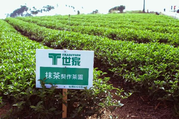 T世家抹茶粉,與南投名間鄉松柏嶺茶農契約耕作,日本靜岡縣抹茶製茶大師指導,引進日本技術研磨製成高優質日式正宗抹茶,台灣在地生產,無輻射污染!
