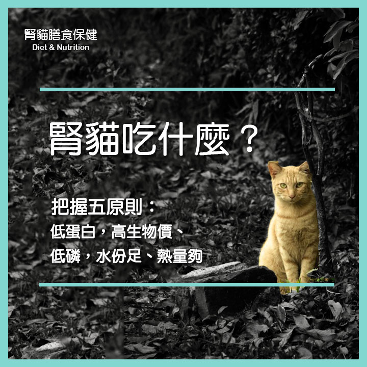 腎貓吃甚麼