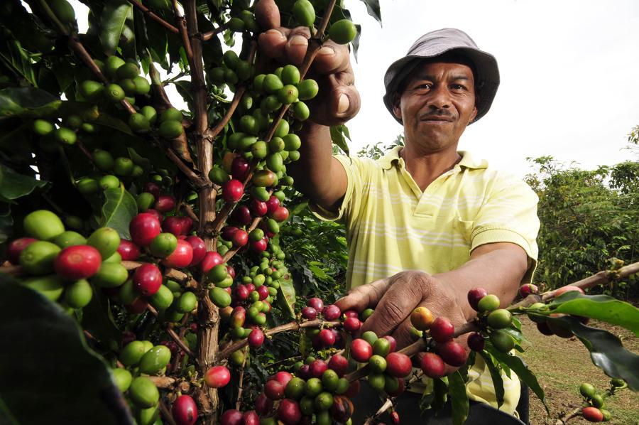Casa卡薩咖啡,莊園咖啡的專家。莊園咖啡是第三波咖啡新浪潮,除了追求各莊園獨特風味之外,更是著重對於咖啡小農的照顧,以公平貿易避免剝削,已達到環境永續,自然平衡的咖啡永續經營