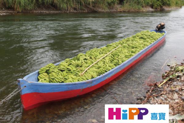 以木船在哥斯大黎加,錫克紹拉河運送的香蕉