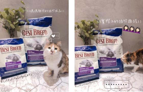 連續多年 WDJ 推薦貝斯比無穀貓糧