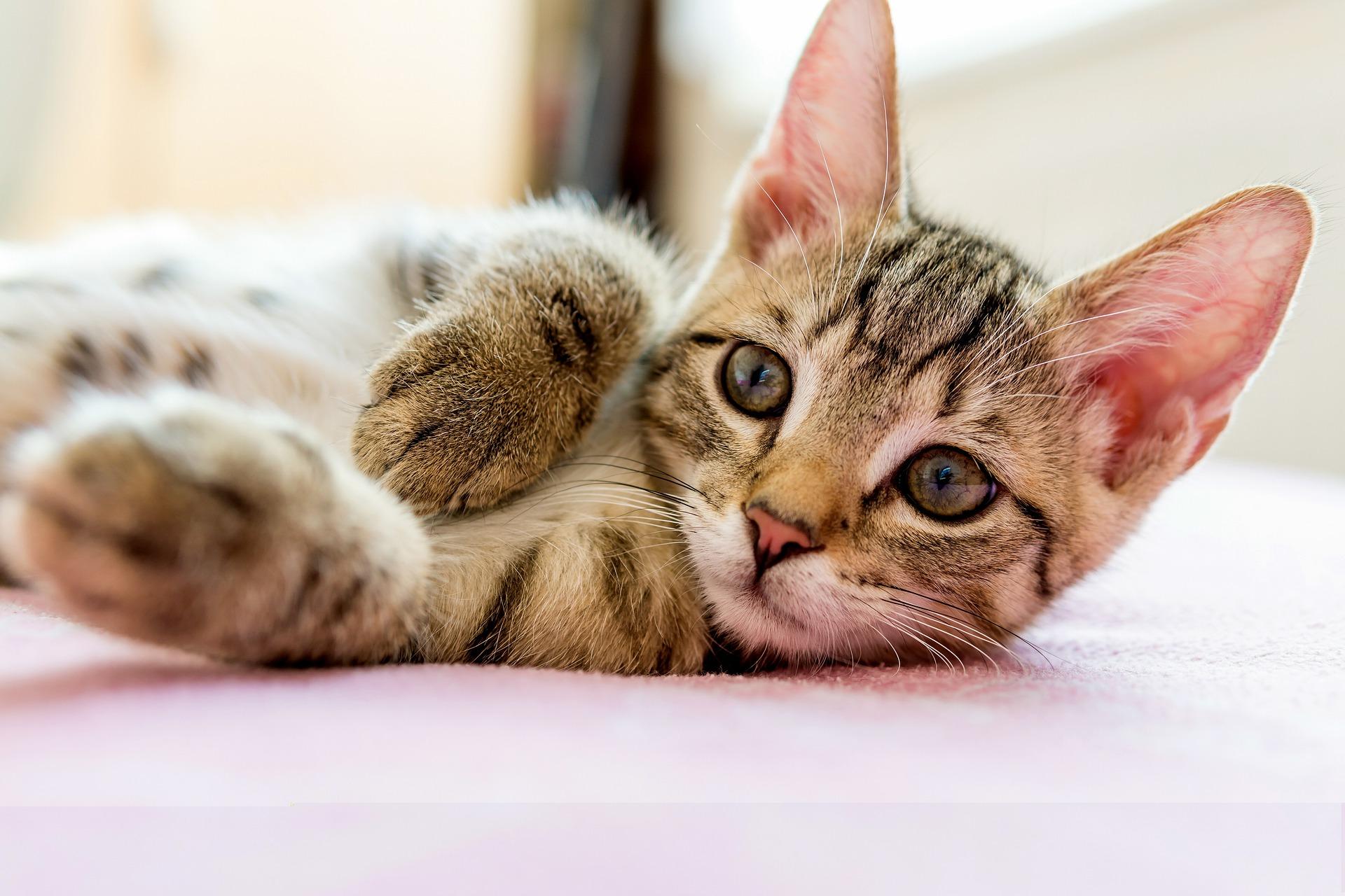 信元製藥幼貓該吃什麼,你餵對了嗎?