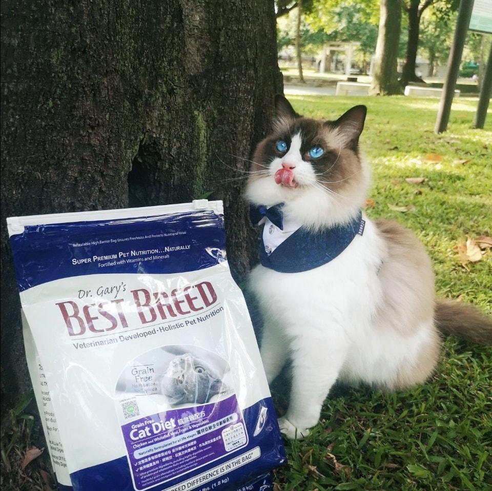 貝斯比貓無穀配方,換飼料的布偶貓
