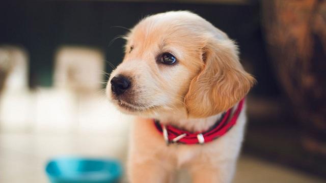 5個不讓狗狗任食的理由