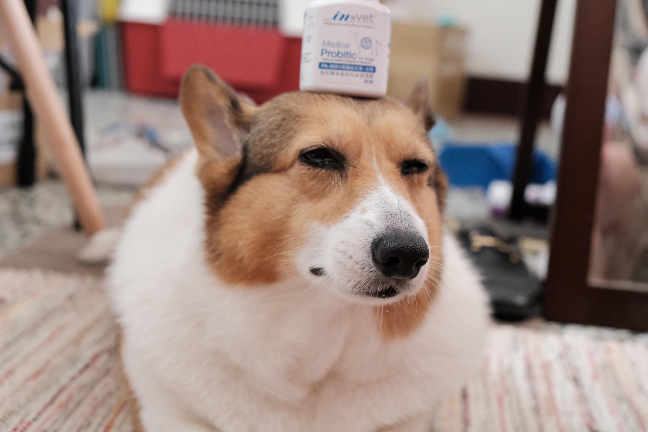 【IN-Vet】犬用-醫護益生菌