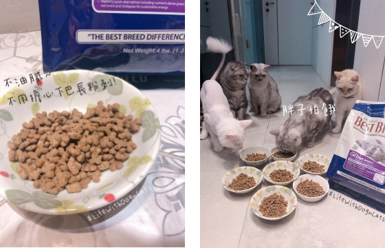 貝斯比無穀貓糧不油膩不易長粉刺