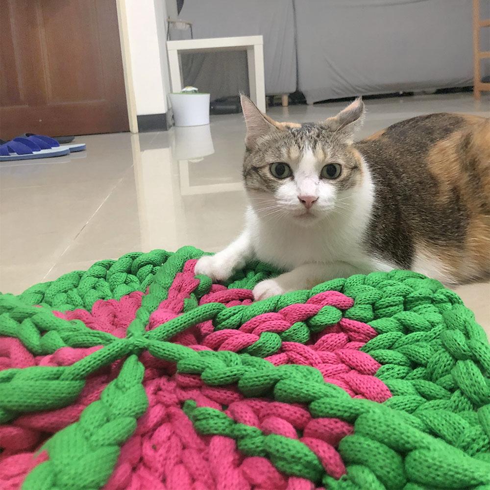 寵物店,坐墊diy巨型編織手作課程
