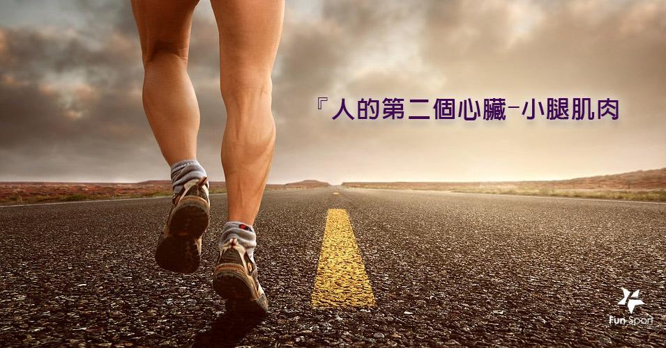 『人的第二個心臟』之稱的小腿肌肉