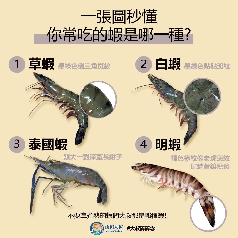 一張圖秒懂 你常吃的蝦是哪一種?