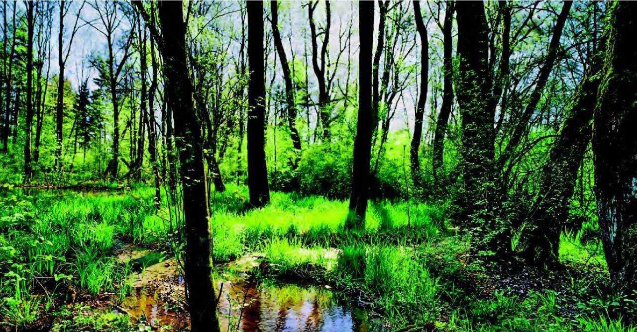 Salus生態保護區