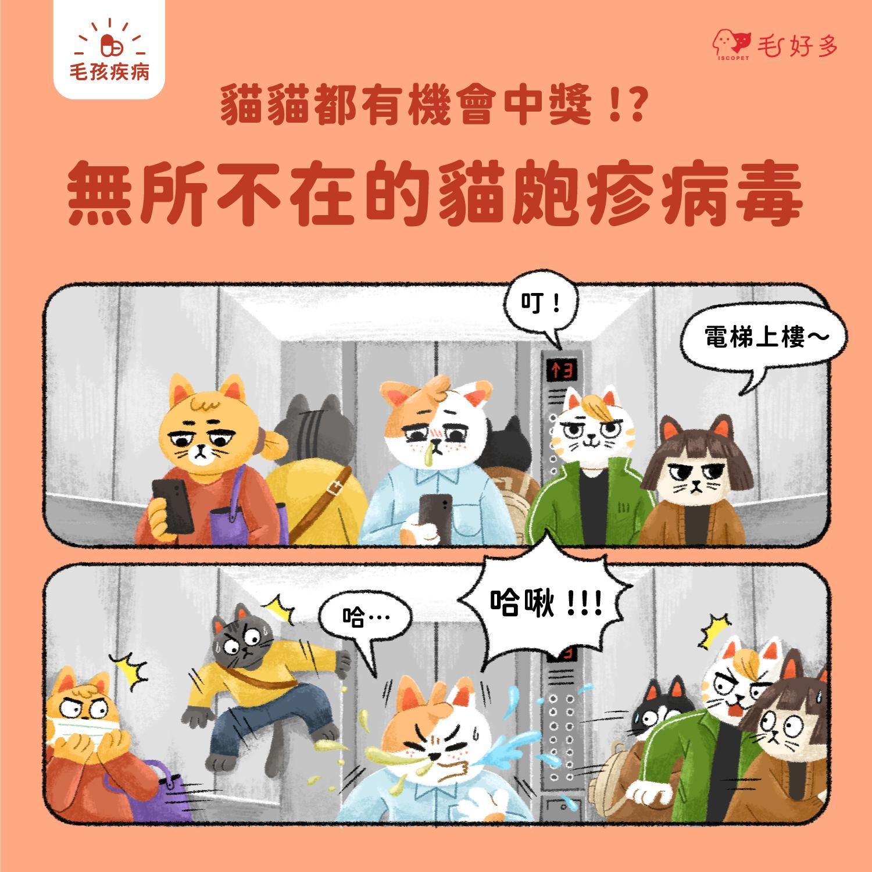 【毛孩疾病】 貓貓都有機會中獎!?——無所不在的貓皰疹病毒