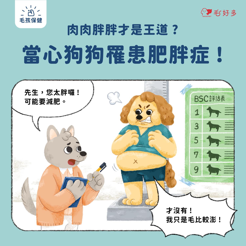 【毛孩保健】 肉肉胖胖才是王道?當心狗狗罹患肥胖症!