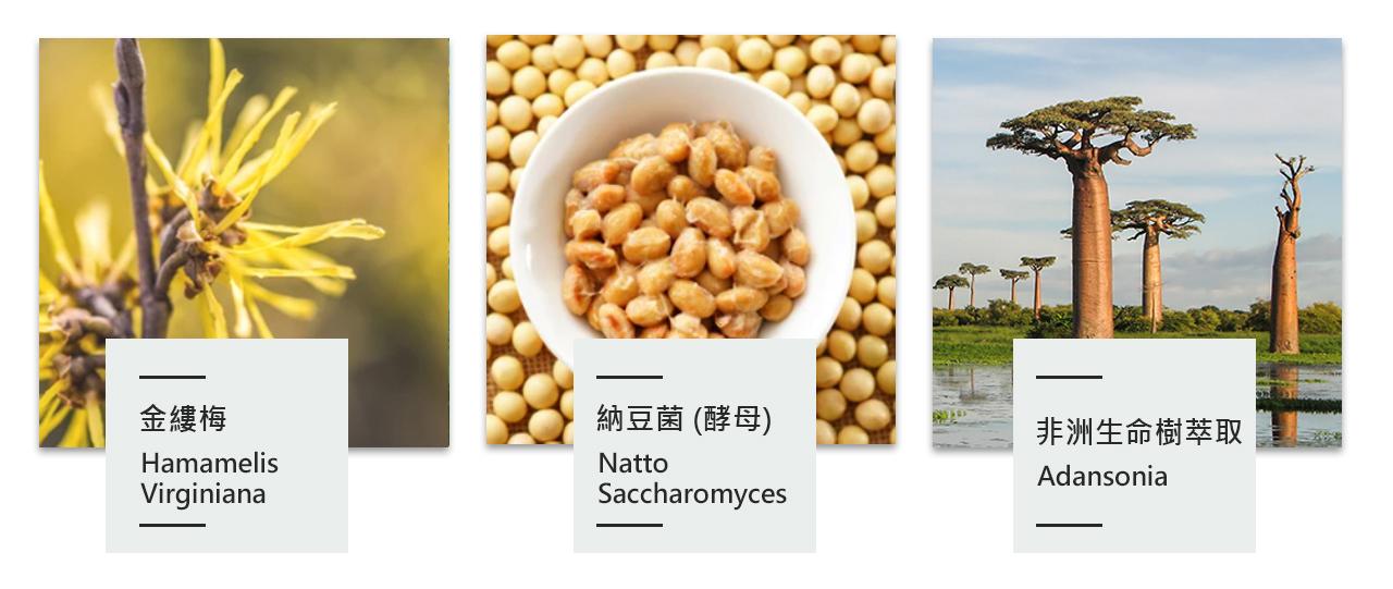 金縷梅,納豆菌,納豆酵母,非洲生命樹